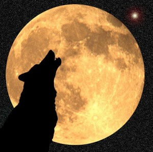 bark at moon