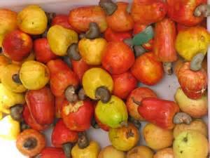 bunch of cashews