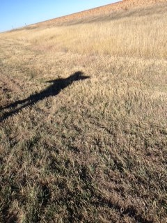 Field Jumping